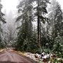 Christmas Tree Permits on sale for Umpqua National Forest