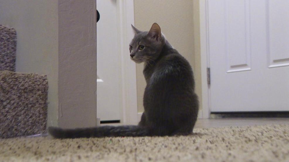 More foster homes needed for stray animals   KTVL