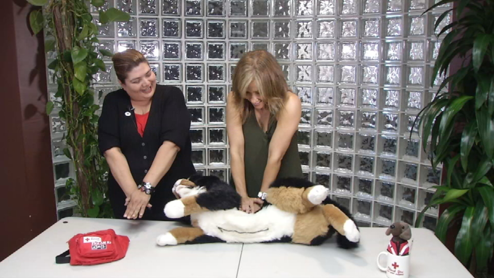 New Red Cross Course Teaches Pet Cpr Woai