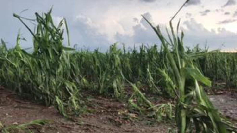 Image result for crop devastation in Nebraska 2019