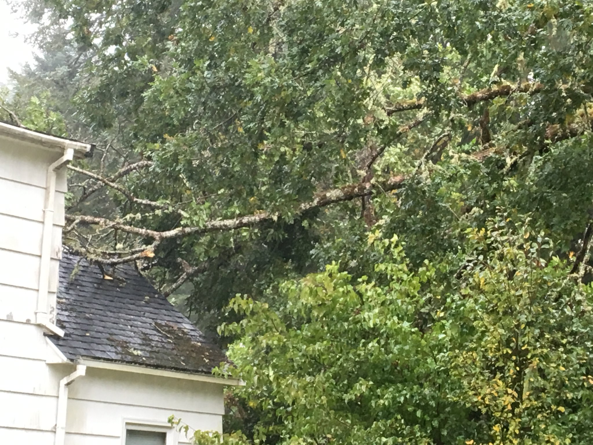 Tree falls on to a home in Forks (Photo: Jon Preston)<p></p>