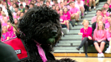 Rudy the service dog is introduced to her new home at Badin High School