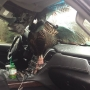 Wild turkey goes through windshield of truck in LaPorte County