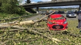 Tree smashes Prius on southbound I-5 in Fife