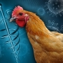 Bird Flu confirmed at Chattooga County chicken plant