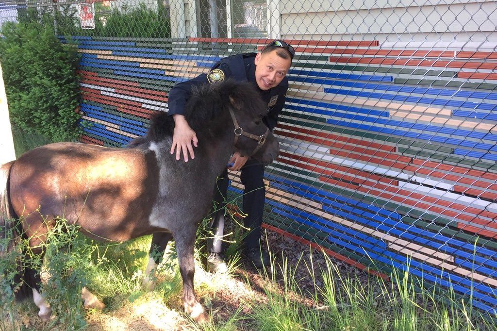 Officer helps wandering pony find its way home - Portland Police photo