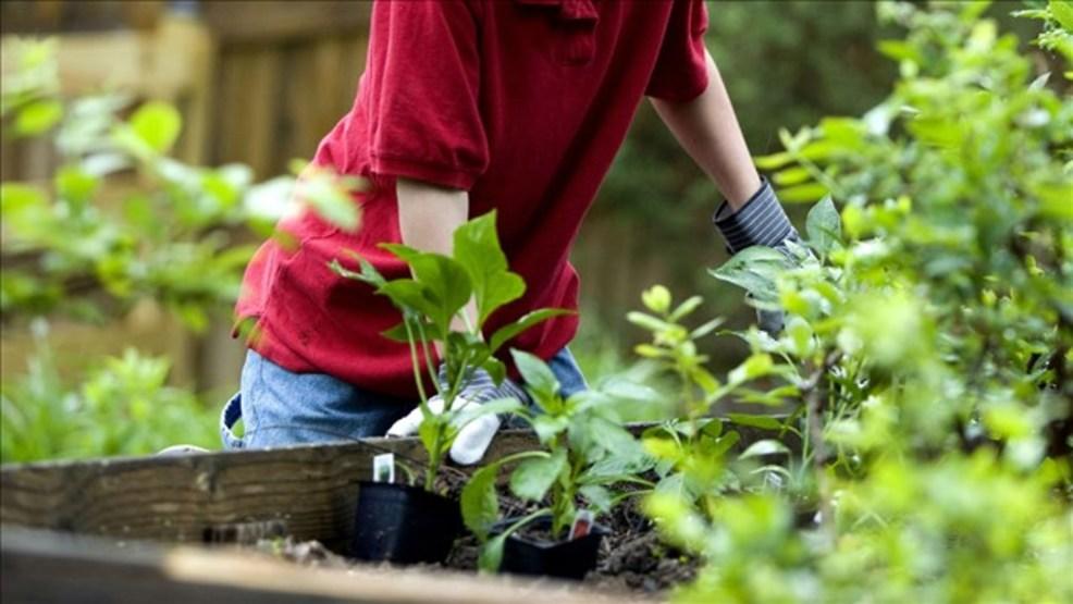 Profitt Report: The Economics Of Starting Your Backyard Garden | WSMH