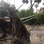 Tropical Storm Irma topples trees across the Grand Strand, Pee Dee