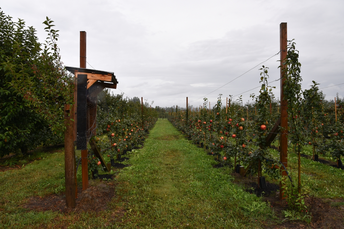 Fall is the perfect time to take a day trip to pick apples, partake in apple festivities and celebrate the harvest. Since Washington state produces almost 60 percent of the nation's supply of apples, we have the best apple picking in the country. (Image: Rebecca Mongrain/Seattle Refined)