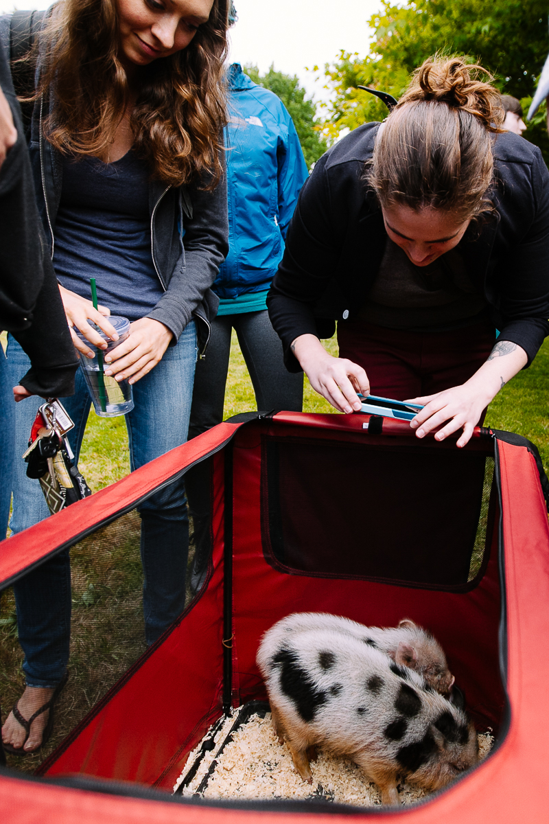 The Seattle Pacific University counseling center brought a mini petting zoo onto campus yesterday to provide some therapy and hopefully comfort in the wake of last week's shooting.   Baby pigs, ponies and goats joined the usual therapy dogs in Tiffany Loop offered 9 a.m. to 5 p.m. on campus Tuesdays and Thursdays. (Image: Joshua Lewis / Seattle Refined)