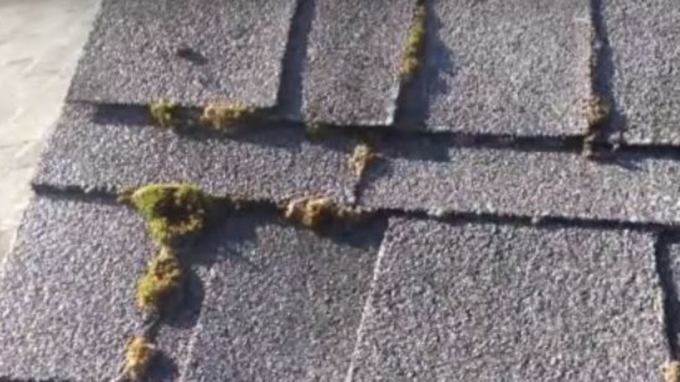 Roof Moss Removal: The Time To Remove It Is Now Before The Rains Return,  Experts Say