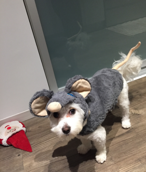 IMAGE: IG user @wicklovesfetch / POST:{ }I'm a mouse!