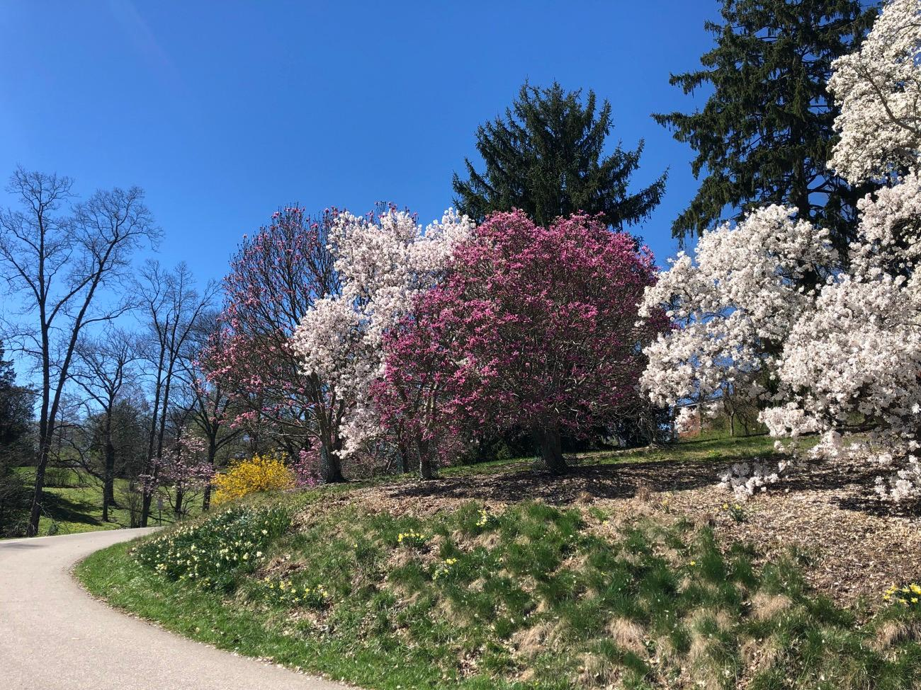MT. AIRY: Mt. Airy features features hiking and bridling trails, an enclosed dog park, disc golf, Ohio's only wheel-chair accessible public treehouse, and a 30-acre arboretum with 5,000 plants representing 1,600 botanical species. / Image: Brian Planalp