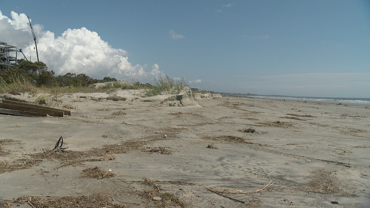 Kiawah Turtles 2 (WCIV).png