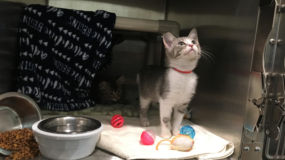 Cats with owners being scooped up and taken to animal shelter in Eugene
