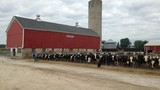 Cooperative mergers shrink Wisconsin dairy farmers' options
