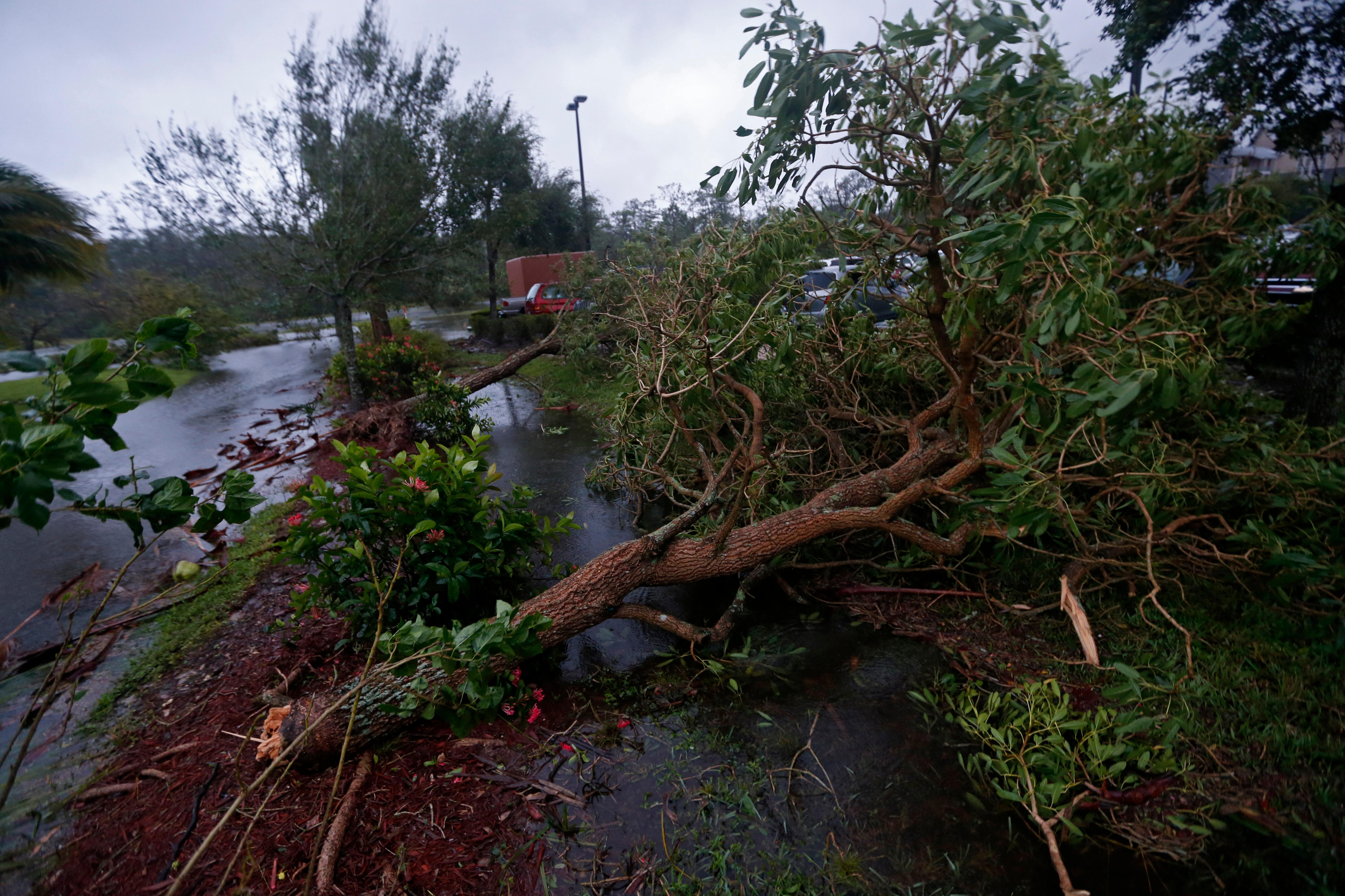 Fallen trees are seen during Hurricane Irma, in Fort Myers, Fla., Sunday, Sept. 10, 2017. Hurricane Irma set all sorts of records for brute strength before crashing into Florida, flattening islands in the Caribbean and swamping the Florida Keys. (AP Photo/Gerald Herbert)