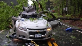 State Police: 65-year-old Gretna man killed after tree falls onto car