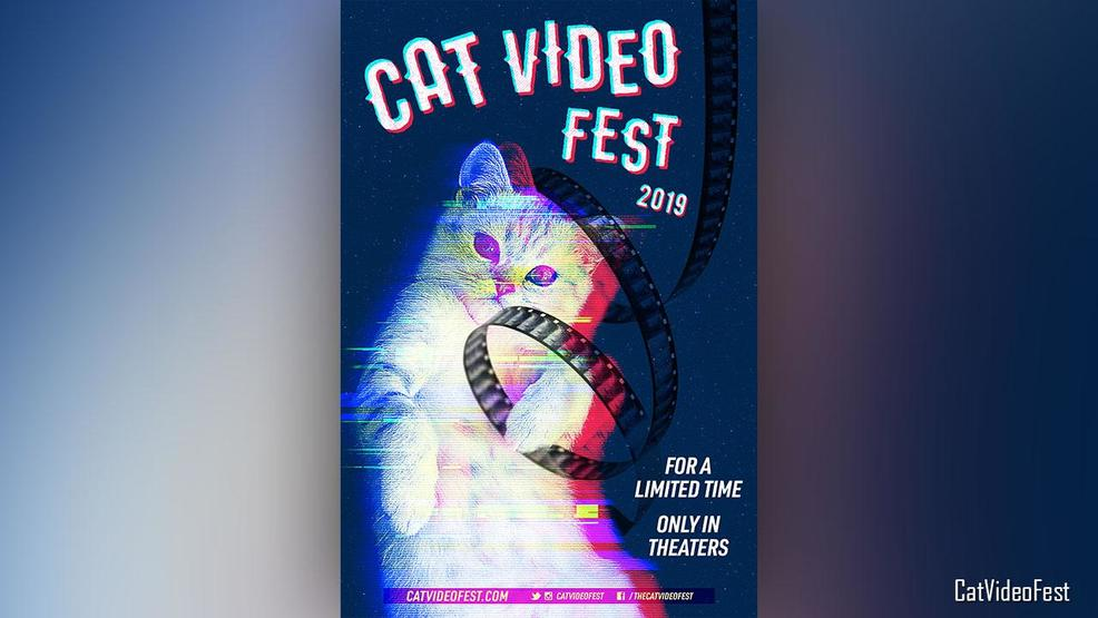 From the computer screen to the silver screen: CatVideoFest comes to Asheville