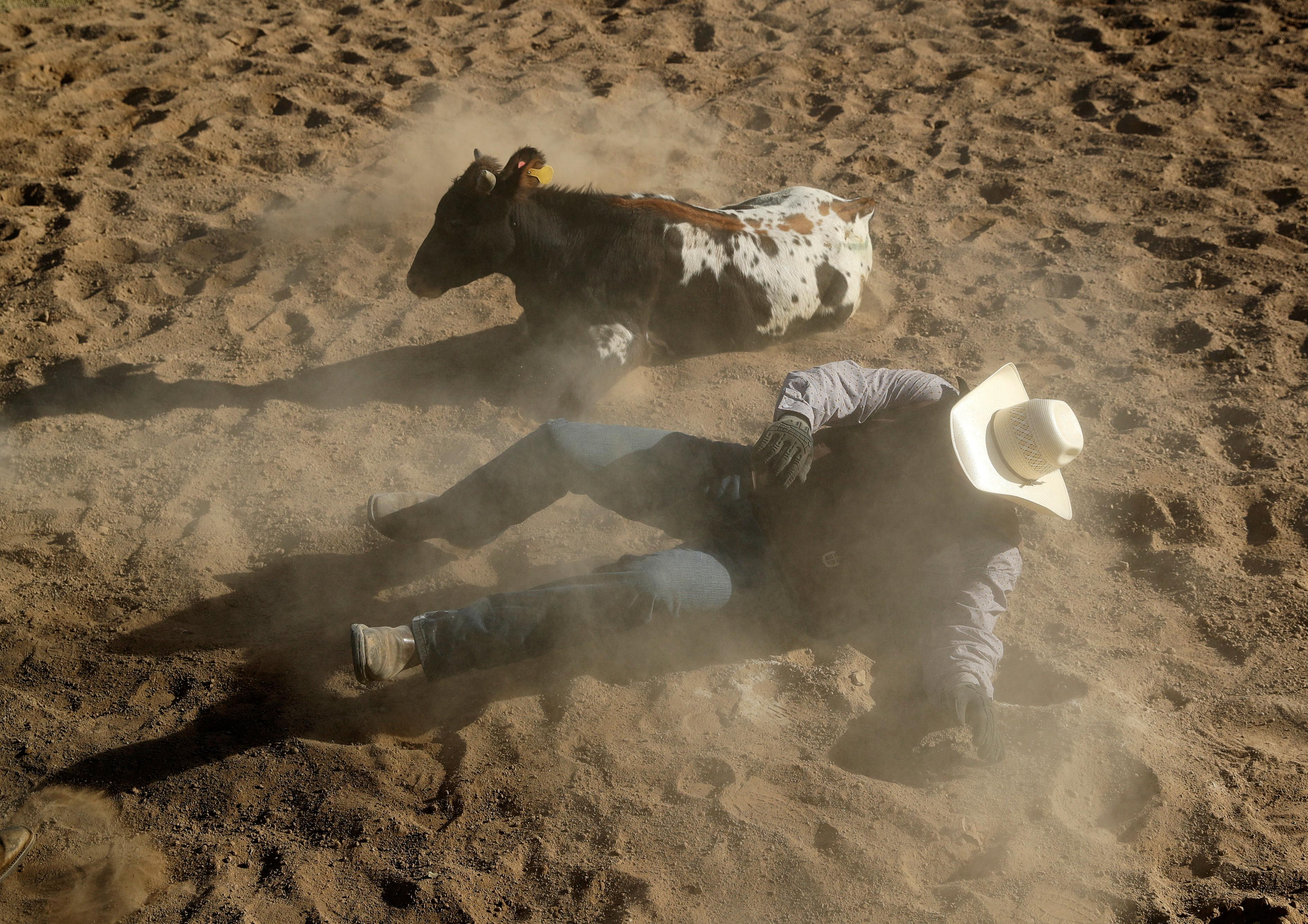 In this Sept. 24, 2017, photo, Chuck Browning gets up out of the dirt after competing in the chute dogging event at the Bighorn Rodeo in Las Vegas. (AP Photo/John Locher)