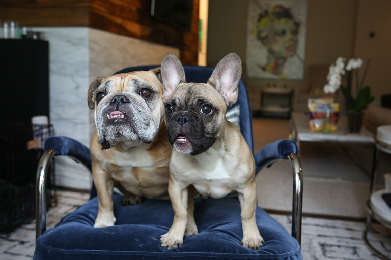 "Meet Lola and Pablo, a six-year-old English Bulldog and a six-month-old French Bulldog. Lola HATES cardboard boxes, umbrellas and lightning. Amazon prime deliveries are her biggest nightmare. Pablo is fearless for the most part, but does try to attack the vacuum cleaner every once in a while. Lola knows this trick where you point your finger at her and say ""stick'em up!"" She puts her front paws on the wall, like she's about to be patted down, and looks back at you for a treat. It's really hilarious. If you or someone you know has a pet you'd like featured, email us at dcrefined@gmail.com or tag #DCRUFFined and your furbaby could be the next spotlighted! (Amanda Andrade-Rhoades/DC Refined)"