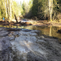 Man fined $90,000 for destroying wetlands in Pierce County
