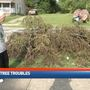 Dayton man comes to FOX 45 for help with tree clean up troubles