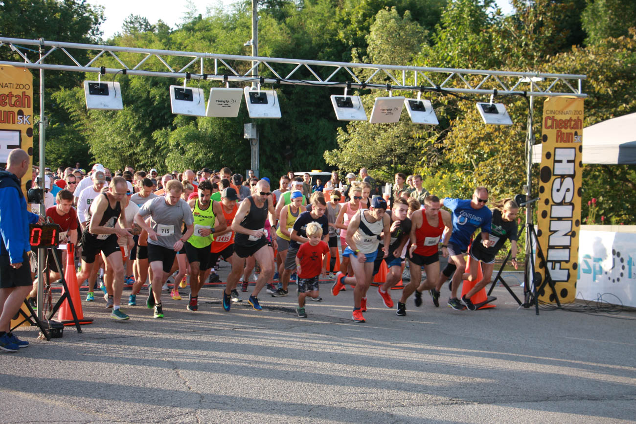 On the morning of Sunday, August 25, the 40th annual Cheetah Run 5K was held at the Cincinnati Zoo. The 3.1-mile course snaked around animal enclosures, scenic gardens, and all around the perimeter of the zoo. Runners received admission to the park and even enjoyed a cheetah encounter after the race. The Cub Run for children under 12 was free and took place after the main race, as well. The proceeds from the run directly benefitted the zoo. / Image: Dr. Richard Sanders // Published: 8.26.19