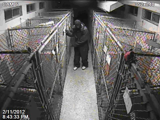 Surveillance cameras at the animal shelter captured images suspect involved in the theft that occurred on Feb. 11.