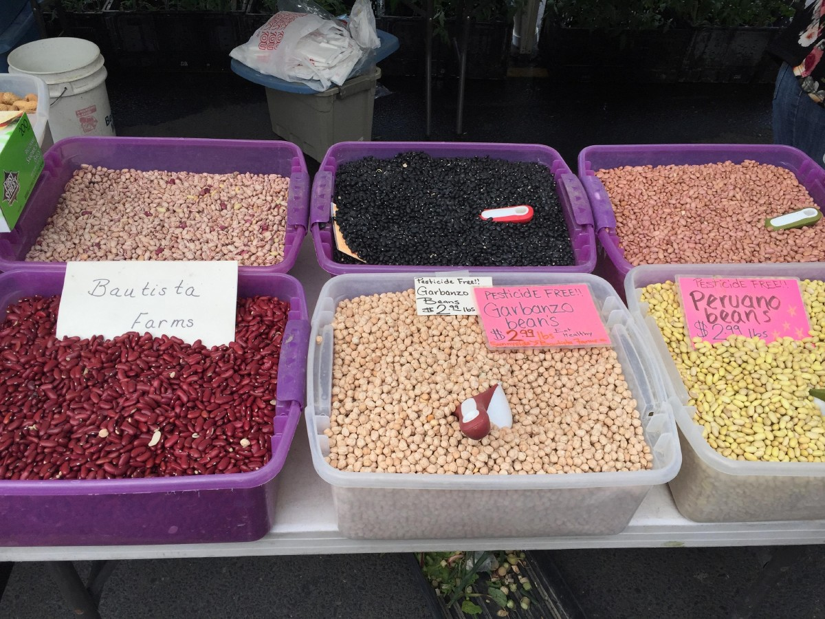 Beans from Bautista Farm at the Yakima Valley Farmers Market. I really wanted to stick my hand in there and play with beans, but I resisted. (Image: Frank Guanco)