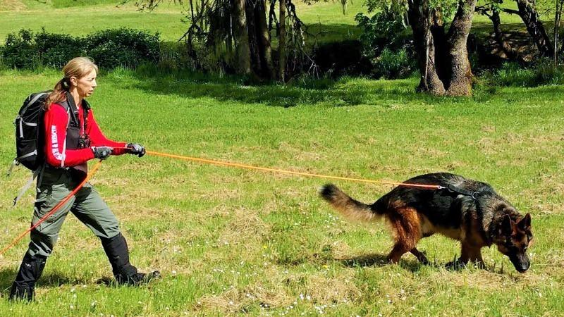 Search & Rescue K9 Teams From Three States Train In