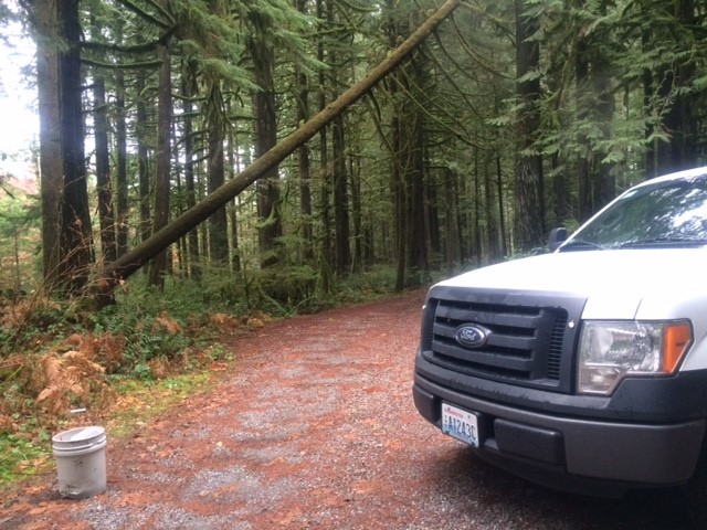 It's an illegal move that stunned park rangers and residents in Snohomish County. A nearly 100-year-old cedar tree on county parkland has been hit by a poacher. (Photo: Snohomish County Parks &amp;amp; Recreation)<p></p>