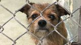 Greenhill Humane Society rescues 98 small dogs