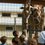 A Wild Experience: Indian Creek Zoo, Lambertville