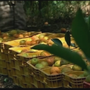 Florida's citrus industry suffering following Hurricane Irma