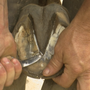 Keeping a horse's hooves healthy