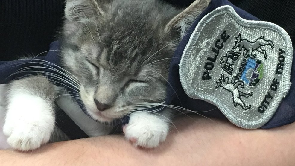 Police Cat Guest at Baby Shower for Kittens