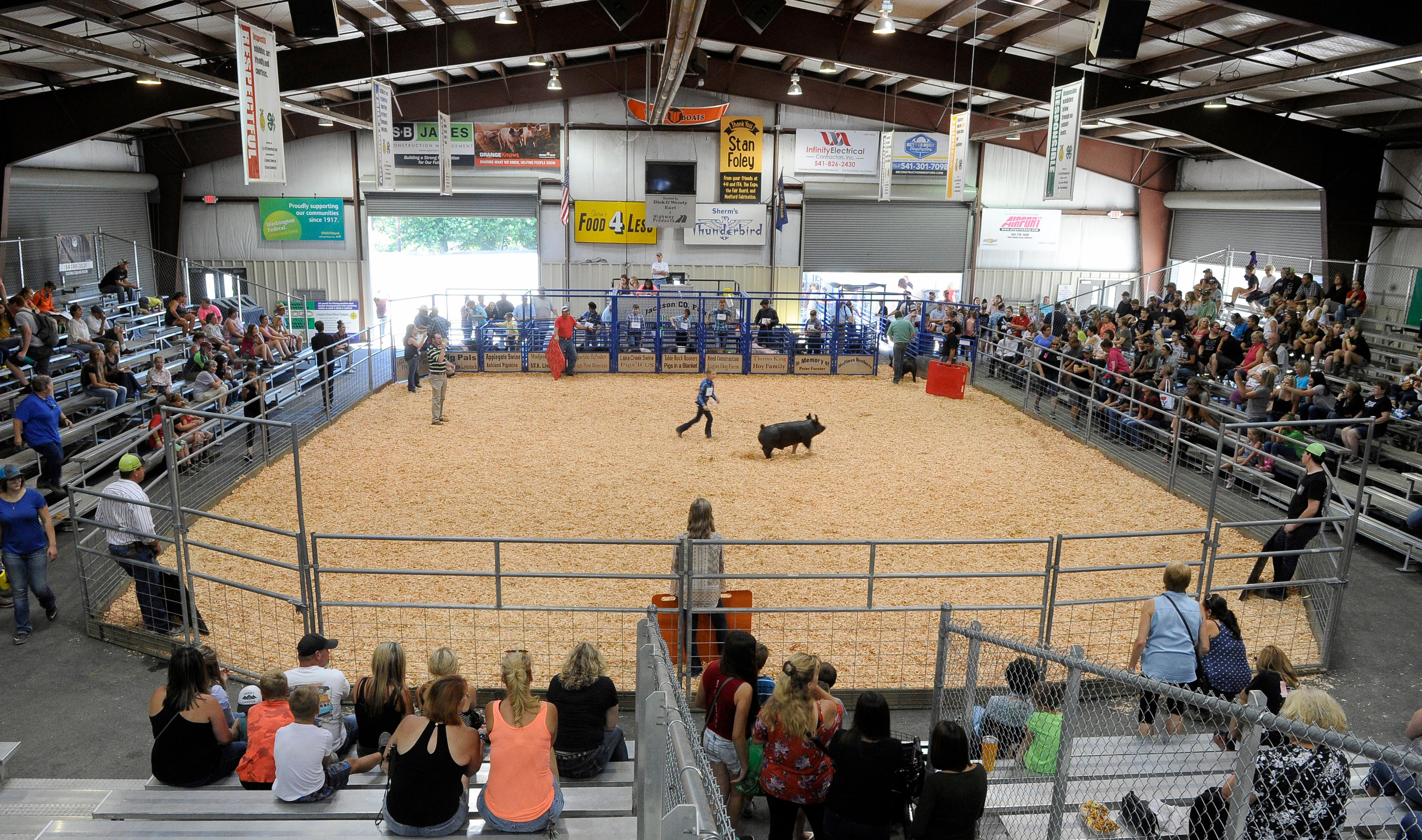 Andy Atkinson / Mail Tribune<br>Pigs are being shown at the Jackson County Fair Tuesday afternoon.