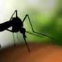 Prince George's County officials confirm first human case of West Nile Virus in 2018
