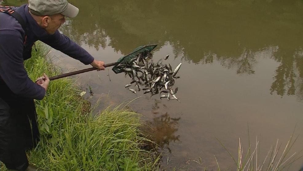 Wv wildlife catfish stocking wchs for Wv fish stocking