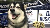 UW Husky mascot 'Dubs' to retire after 2018 football season