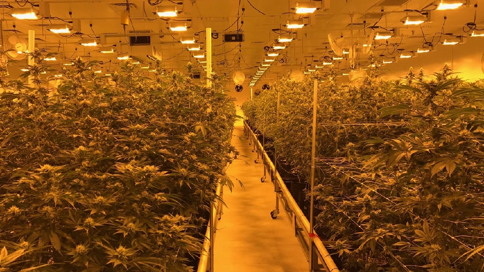 Nevada braces for legal marijuana industry boon, lawmakers to set ...