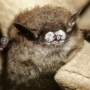 Disease killing bats: People can hurt and help
