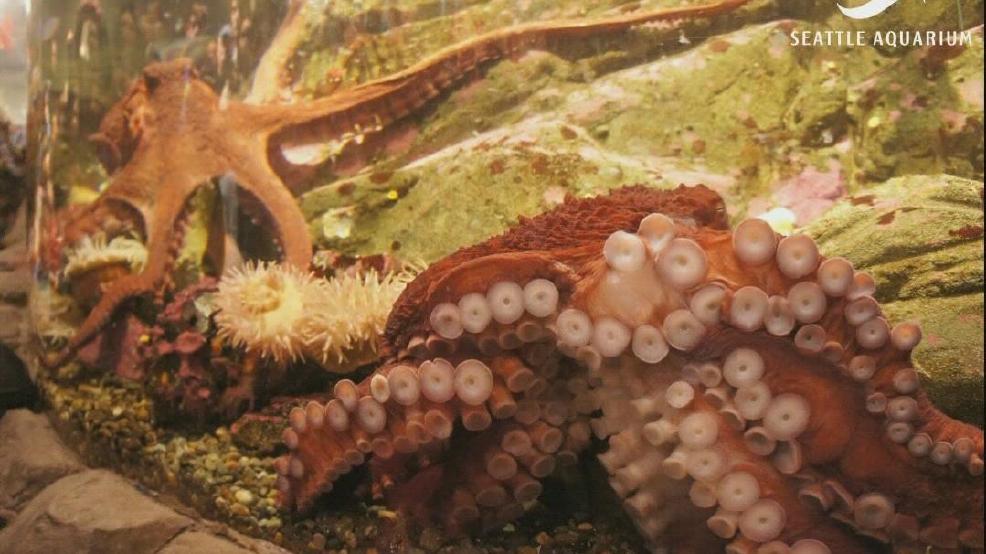 Aquarium Sex 84