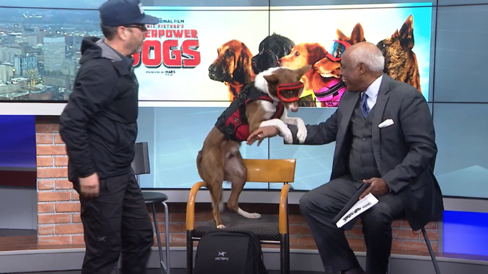 'Superpower Dogs' comes to the Omnimax at the Cincinnati Museum Center