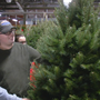 Nationwide Christmas tree shortage not affecting CNY