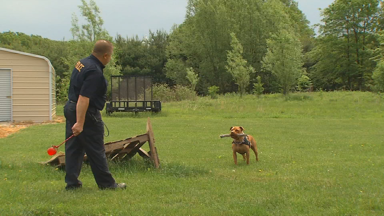 Leonard didn't have any training or know any commands, but loves to play. So trainers were able to use toys as a treat to help him learn skills to be a narcotics K9 (WSYX/WTTE)