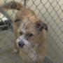 18 dogs from a Texas shelter looking for a new home here in Siouxland