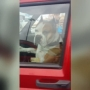 Watch This: Dog honks for owner