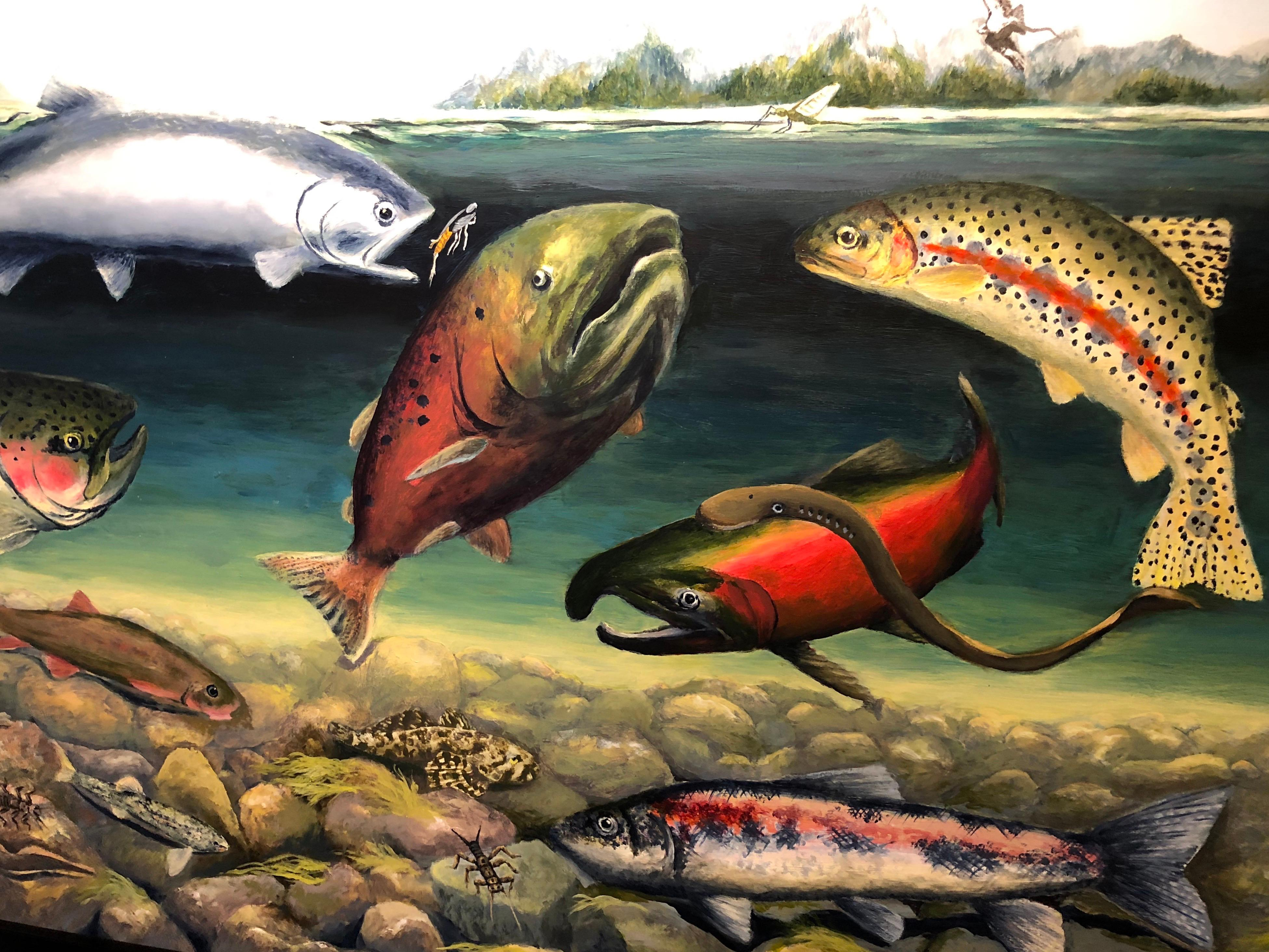 A detail from Ashland artist Deb Van Poolen's painting that's featured on the Klamather River Fishes poster. Photo by John Darling